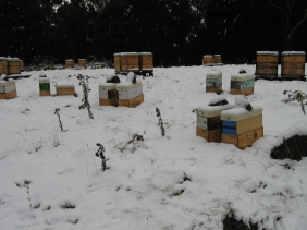 Beehives in the snow at Pelverata
